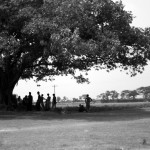 """The """"big tree"""" or """"botomul"""" is the center of the film. Under this tree is where decisions are made that inevitably change the lives of people living in the village."""